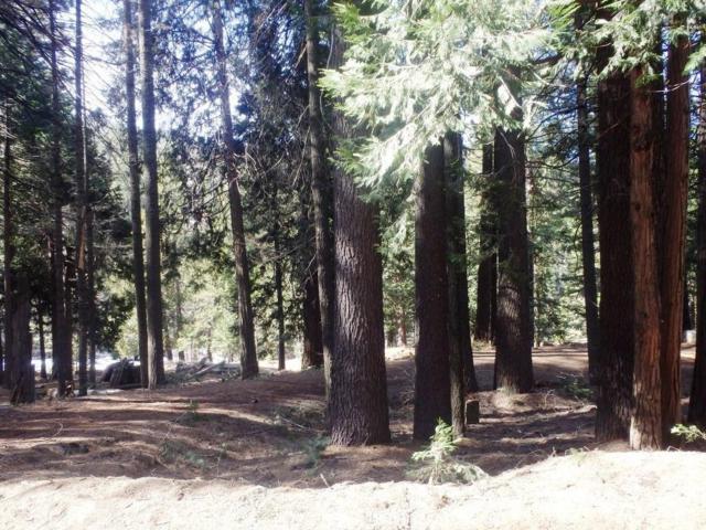 7174 Yosemite Park Way, Yosemite West, CA 95389 (#500094) :: Soledad Hernandez Group