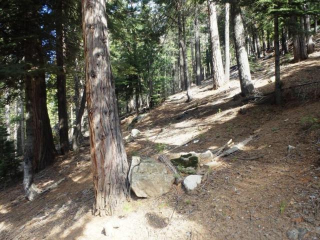 7163 Yosemite Park Way, Yosemite West, CA 95389 (#500095) :: Soledad Hernandez Group