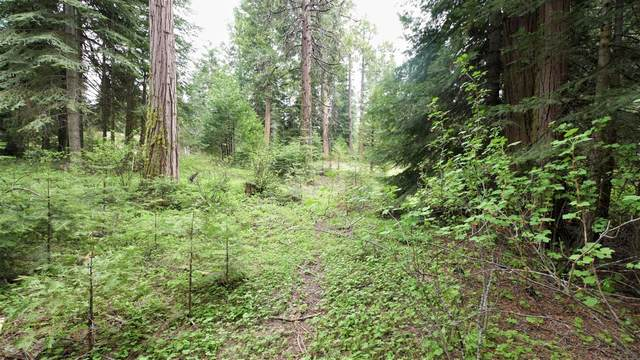 0 Foxglove, Shaver Lake, CA 93664 (#542337) :: Raymer Realty Group