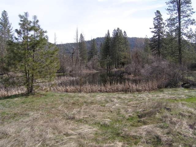 5 Shaver Springs, Auberry, CA 93602 (#542343) :: Raymer Realty Group