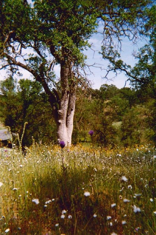 10762 Millerton Road, Clovis, CA 93619 (#497739) :: Raymer Realty Group