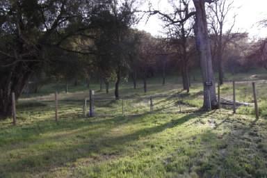 0 Dunlap Road, Dunlap, CA 93621 (#507262) :: FresYes Realty