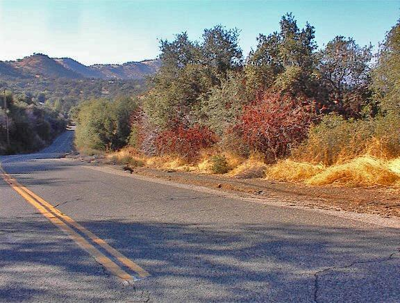 0 Chuckwagon Road, Squaw Valley, CA 93675 (#512613) :: FresYes Realty