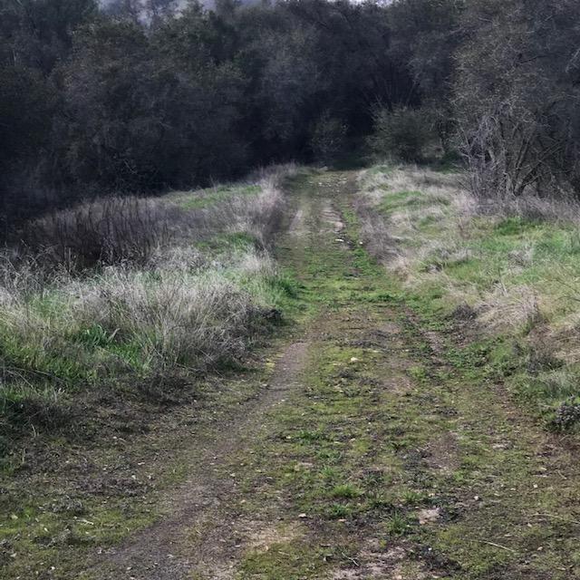 0 Baywood, Squaw Valley, CA 93675 (#517049) :: Soledad Hernandez Group