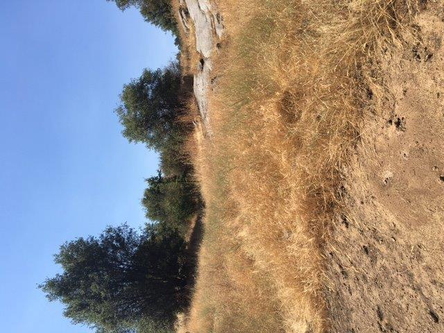 0 Mound Lane, Squaw Valley, CA 93675 (#517644) :: Soledad Hernandez Group