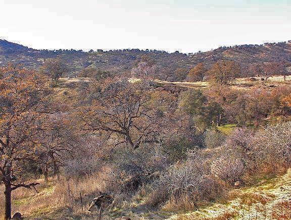 0 Sassafras Lane, Squaw Valley, CA 93675 (#535451) :: FresYes Realty
