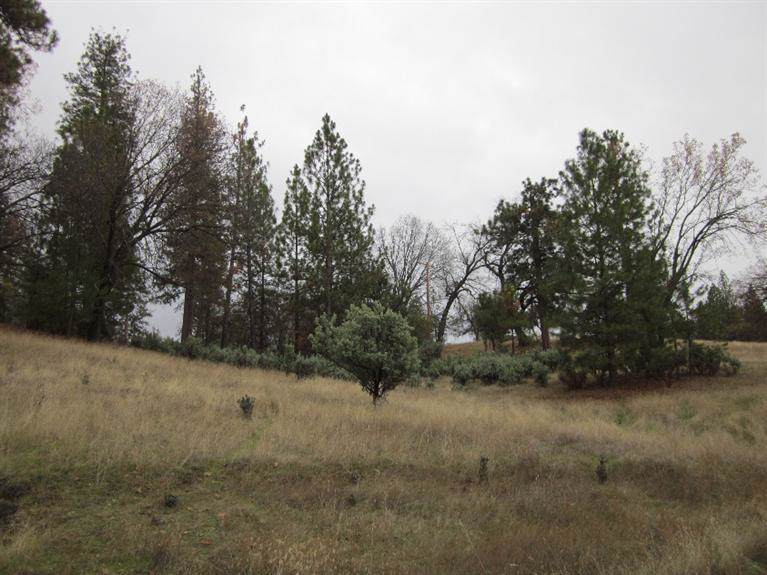 0-Lot 6 Hard Times Ranch Road - Photo 1