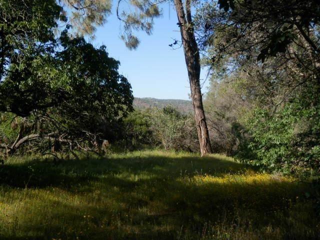 0 Stardust Lane, Coarsegold, CA 93614 (#540172) :: Dehlan Group