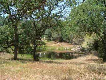 1232-2.32 Ac Starlight Dr, Coarsegold, CA 93614 (#548473) :: Raymer Realty Group