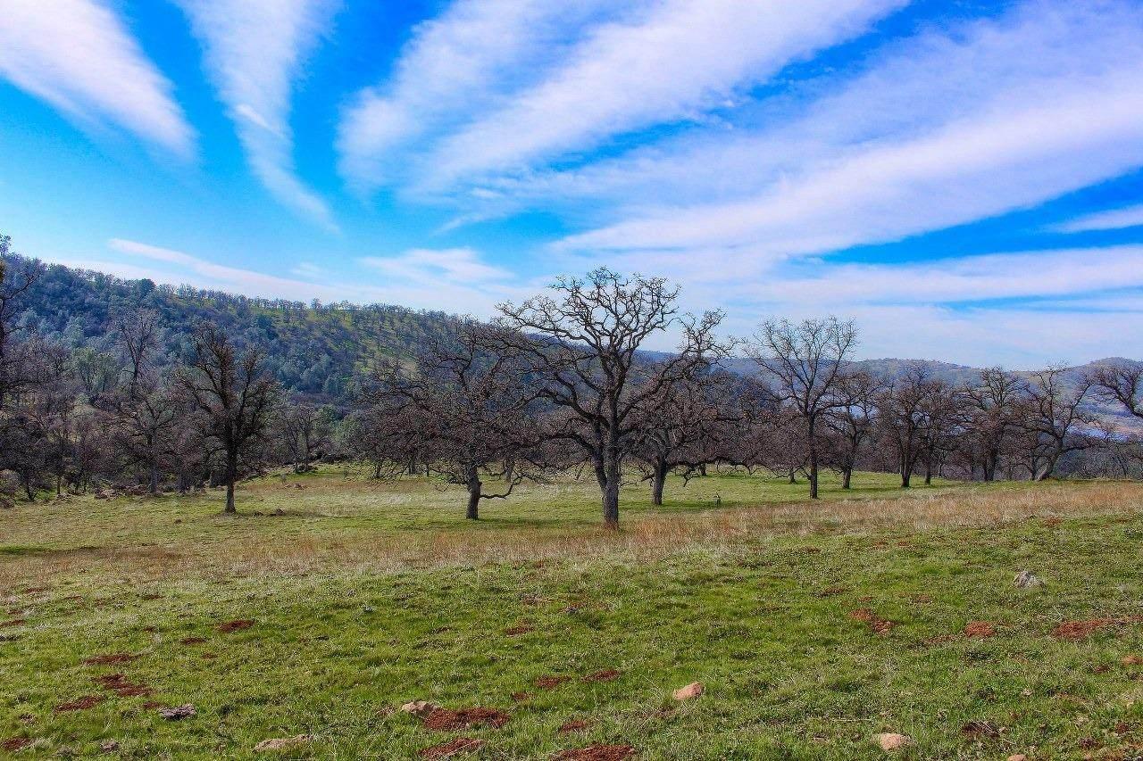 0-160 AC Cotton Creek Road - Photo 1