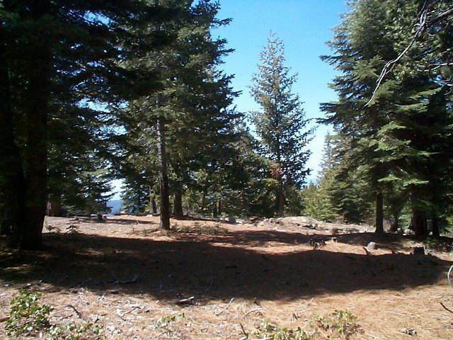 0-Lot 34 Mountain Heather Lane, Shaver Lake, CA 93664 (#557792) :: Your Fresno Realty | RE/MAX Gold