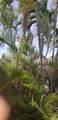 4641 Bougainvilla Dr - Photo 18