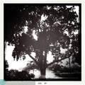 9411 Hollybrook Lake Dr - Photo 5