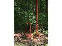 118 Leafy Knoll Cr - Photo 9