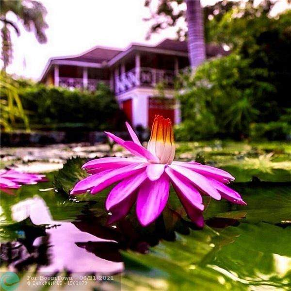 1 St Ann's Bay, Jamaica - Photo 1