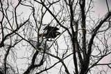 123 Red Bird Lane - Photo 27