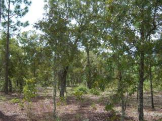 133 Sandpiper Drive, Hawthorne, FL 32640 (MLS #404507) :: Bosshardt Realty