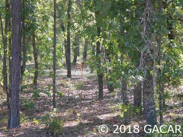 269 Cue Lake Drive Blk Lot 4, Hawthorne, FL 32640 (MLS #414674) :: OurTown Group
