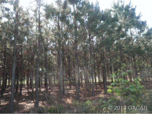 00 Vacant Lot, High Springs, FL 32643 (MLS #286694) :: Bosshardt Realty