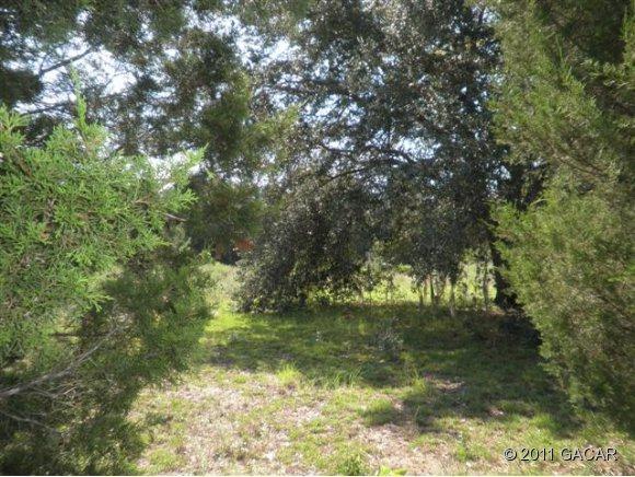 00 NE 60th Avenue, High Springs, FL 32643 (MLS #326399) :: Rabell Realty Group
