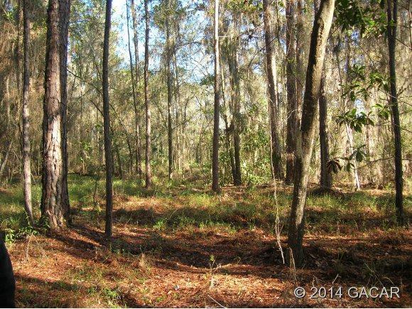 21619 Ne 115 Avenue, Earleton, FL 32621 (MLS #354906) :: Florida Homes Realty & Mortgage