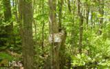 736 Deer Ln - Photo 1
