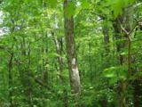 0 Wild Bird Lane (Alex Mountain) - Photo 2