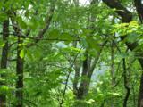 0 Wild Bird Lane (Alex Mountain) - Photo 3