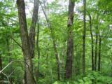 0 Wild Bird Lane (Alex Mountain) - Photo 4