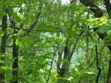 0 Wild Bird Lane (Alex Mountain) - Photo 7