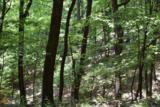 4522 Sassafras Mountain Trl - Photo 4