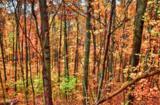 0 Dogwood Rd - Photo 3