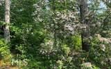 0 White Pine Ridge - Photo 8