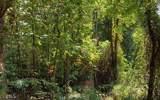 0 Bear Paw Ln - Photo 8
