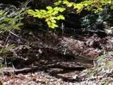 0 Teel Mountain Ln - Photo 4