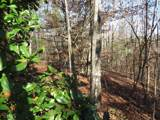38.6 Acres Cross Creek Ln - Photo 43