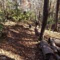 29 acres Monroe Ridge Rd - Photo 68