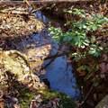 29 acres Monroe Ridge Rd - Photo 71