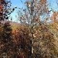 29 acres Monroe Ridge Rd - Photo 75