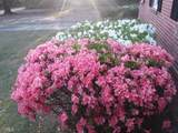 341 Greenhill Rd - Photo 85