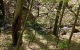 0 Hidden Springs Dr - Photo 8