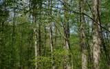 0 Deer Trce - Photo 13