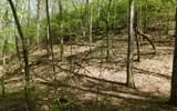 0 Deer Trce - Photo 15