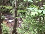 1.27 Mountain Creek Hollow - Photo 16