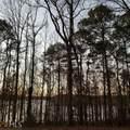 223A 223A Piedmont Lake Rd - Photo 33