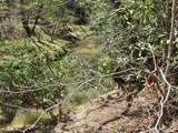 6 Tall Pines - Photo 13
