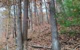 0 Woods Of Hunter - Photo 11