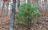 0 Woods Of Hunter - Photo 12