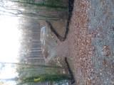 5448 Dogwood - Photo 1