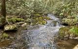 0 Jack's River - Photo 15